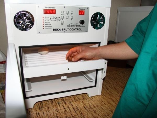 Поставяне на яйцата в спациално подготвените инкубатори