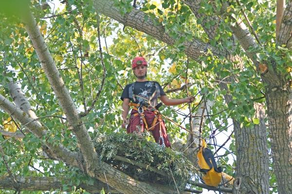 Поставянето на изкуственото гнездо, което сега е заето от царските орли