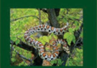 FIELD GUIDE TO REPTILES AND AMPHIBIANS IN BULGARIA, 2007